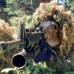 Бурундук с винтовкой