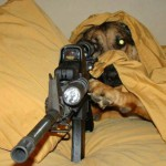 Собака с винтовкой